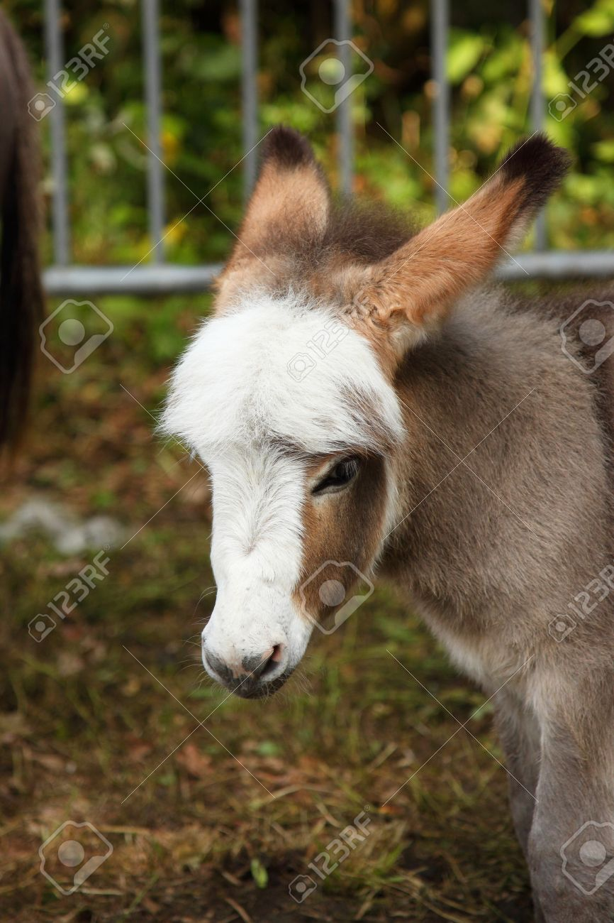 Young ass young donkey young ass Stock Photo - 15696529