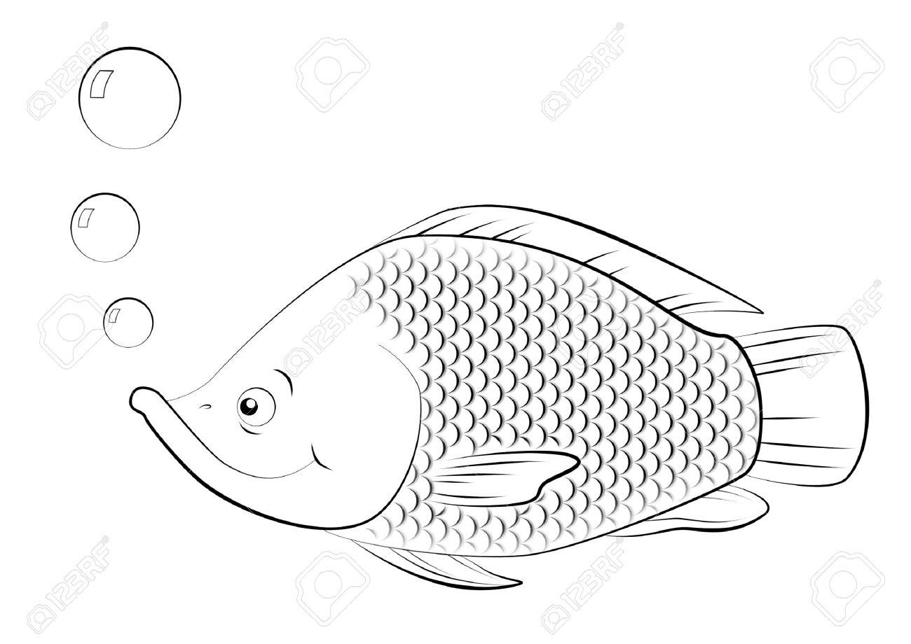 Line drawing of swimming Saint Peter's fish. - 8020977