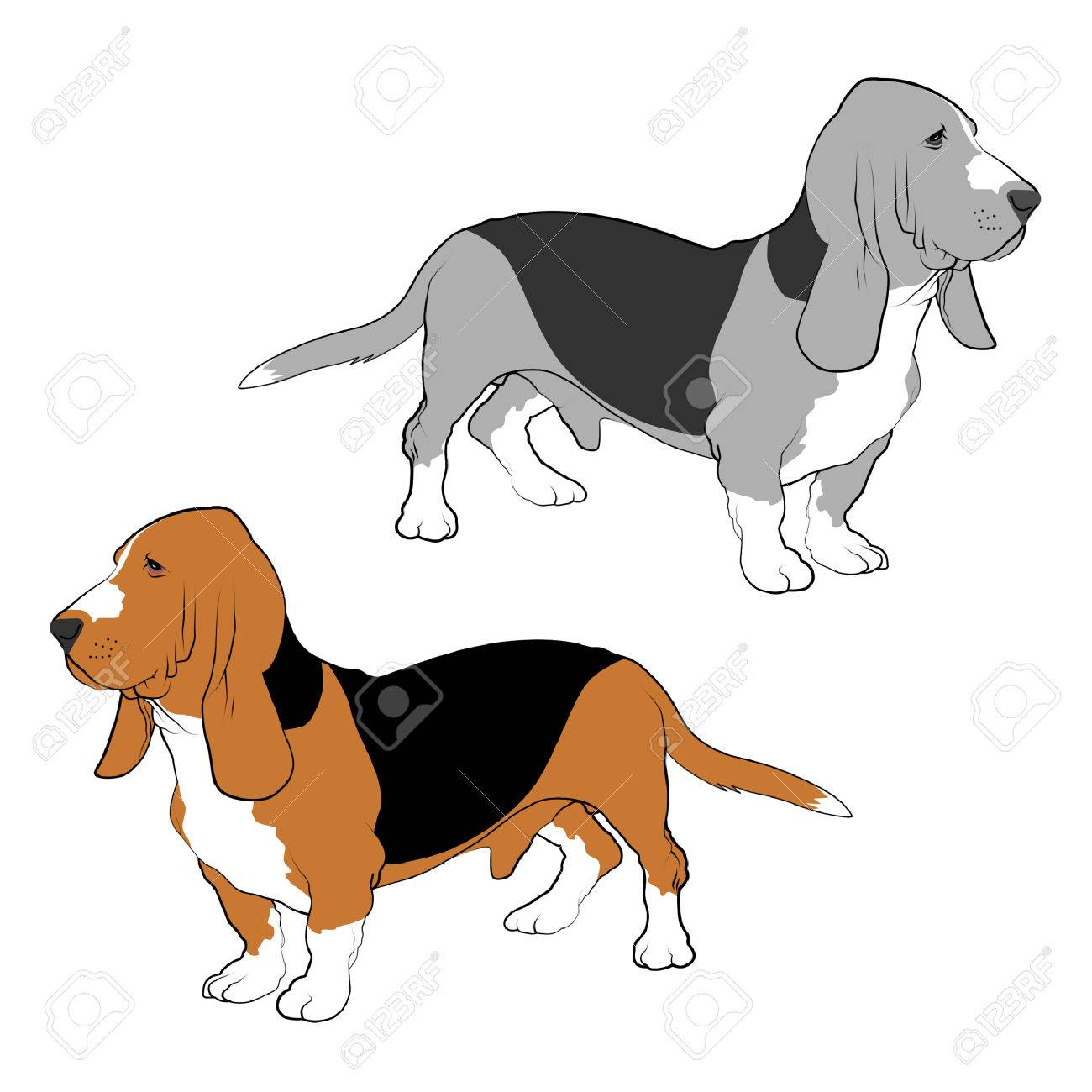 Basset Hound line drawings. - 71795003