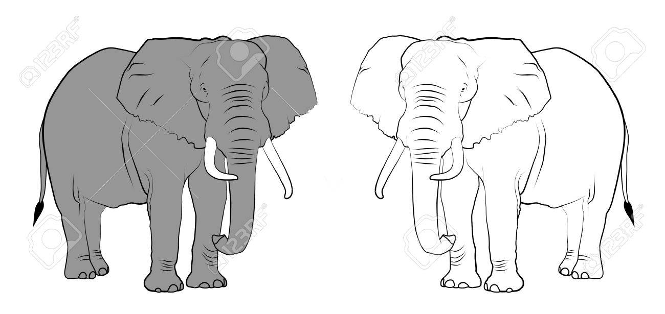 Line drawing of elephants - Colored and Black & White. - 71796557