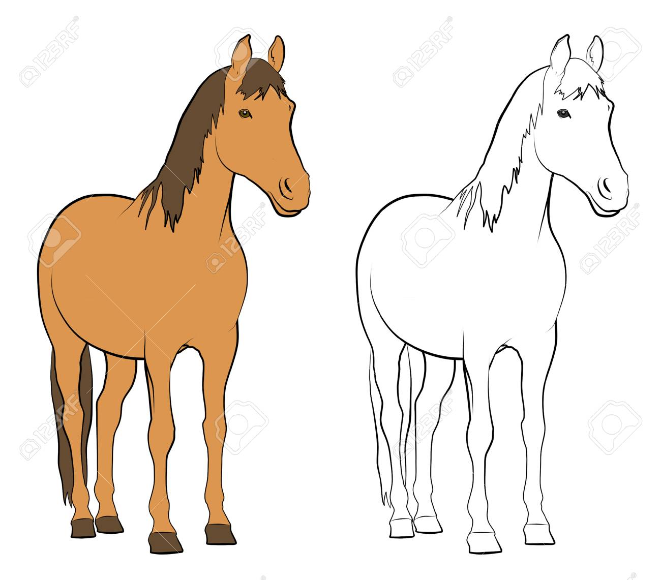 Line drawings of horse - Colored and Black and White - 71797013