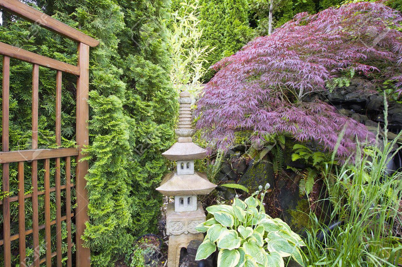 Japanese Inspired Garden With Stone Pagoda Trellis And Maple Tree Stock  Photo   14192679