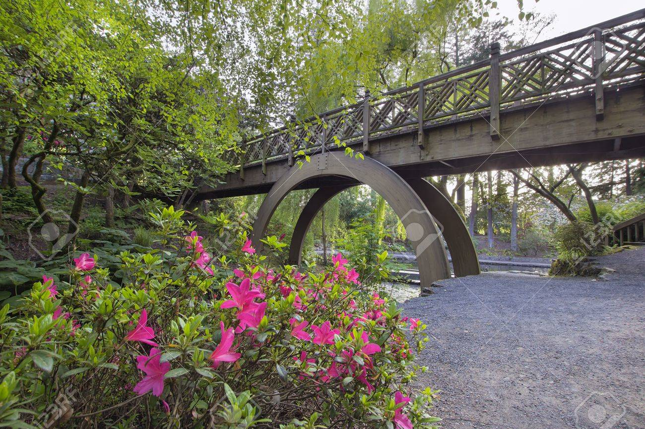Arch Wooden Foot Bridge At Crystal Springs Rhododendron Garden With Azaleas  Blooming In The Foreground Stock