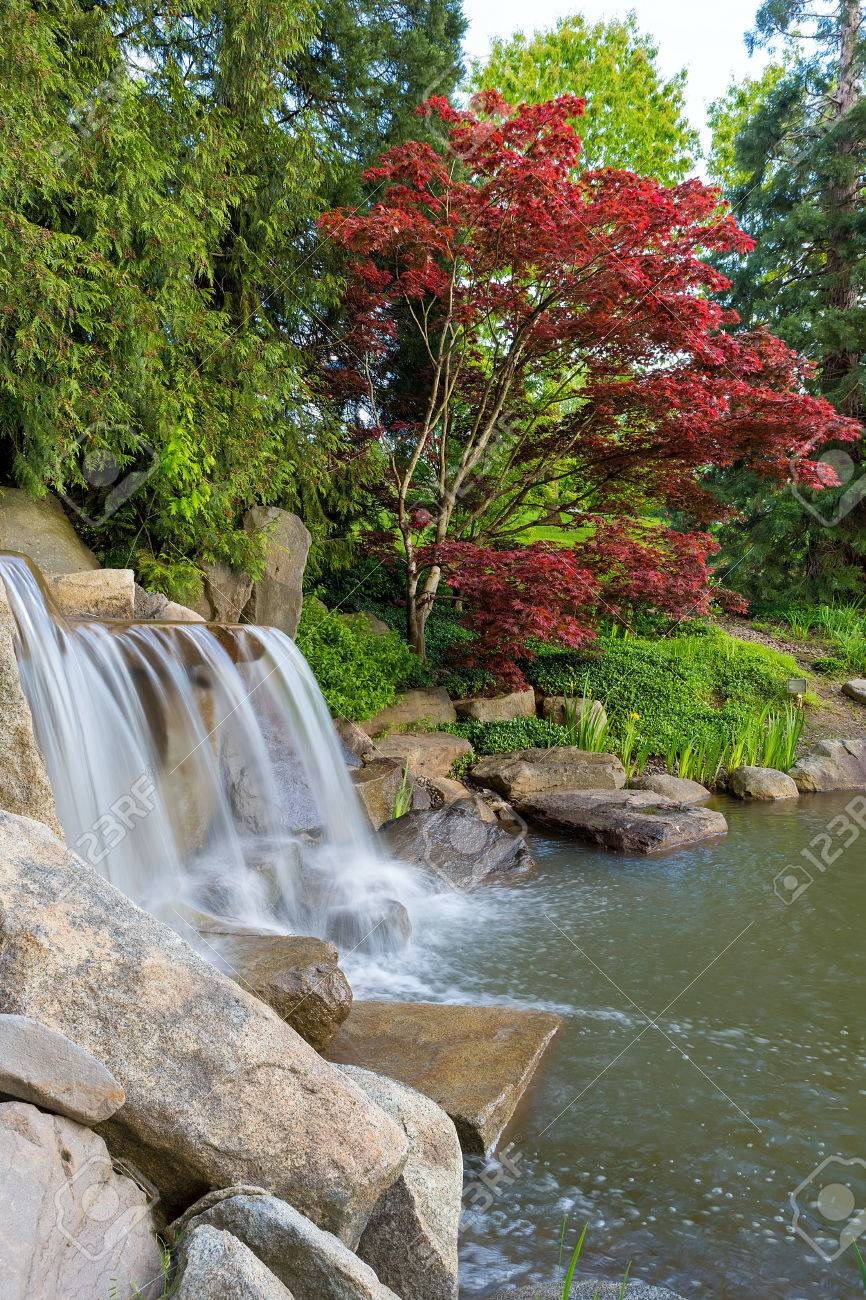 waterfall and pond in landscaped backyard garden with red maple