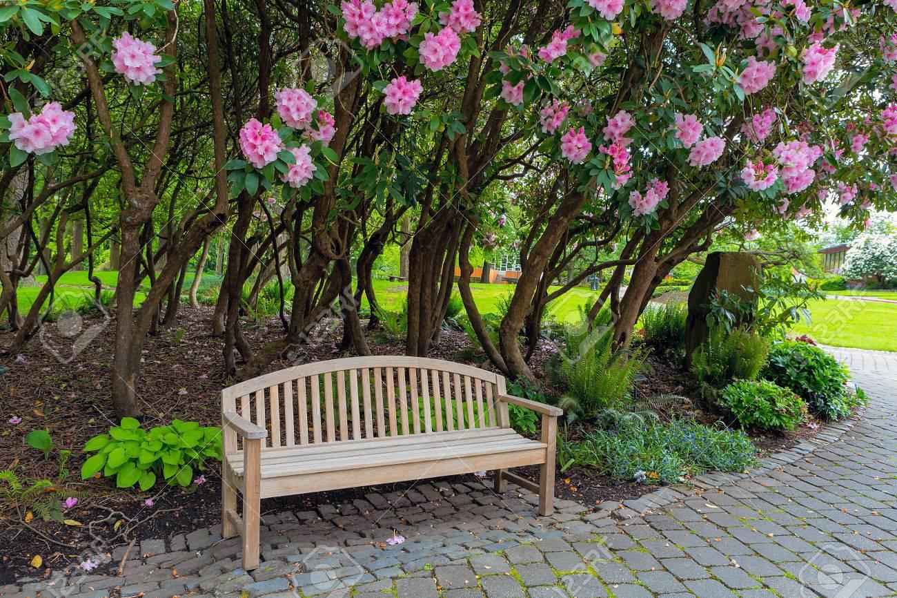 Garten Holzbank Unter Den Blühenden Rhododendron Sträuchern Im Park