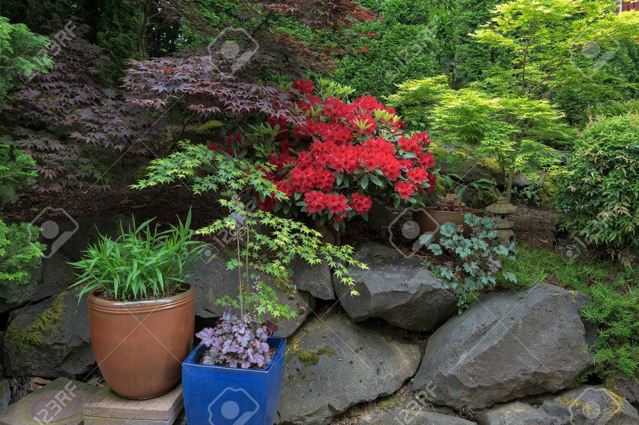 lush garden backyard landscaping with trees shrubs plants pots