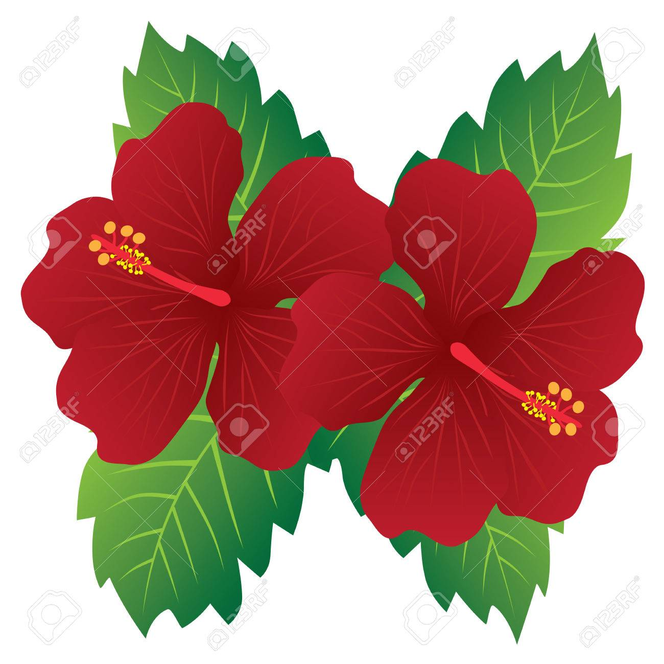 Hibiscus national flower choice image beautiful exotic flowers malaysia national flower red hibiscus flowers with leaves color izmirmasajfo
