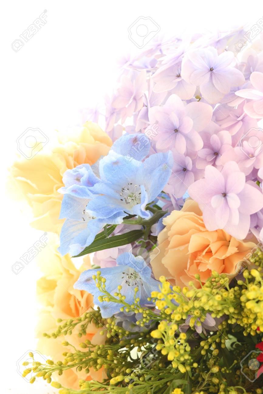 wann blühen hortensien