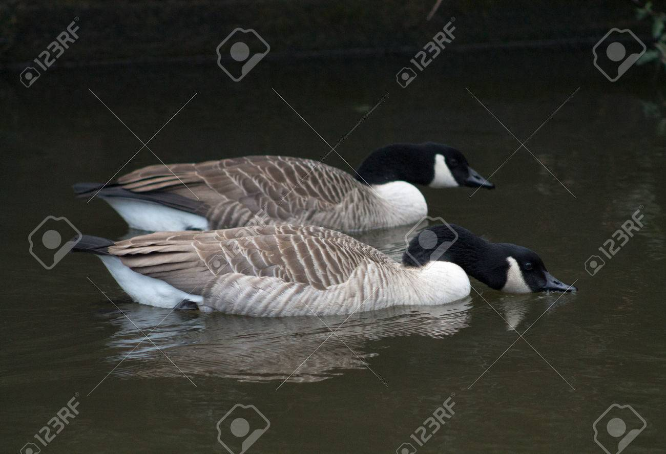 Canada Goose' official food