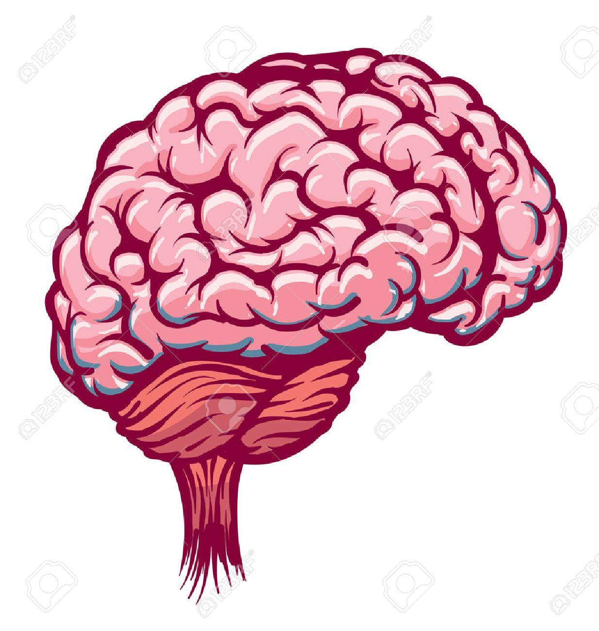 cartoon brain pink red royalty free cliparts vectors and stock rh 123rf com Brain Clip Art heart and brain cartoon images