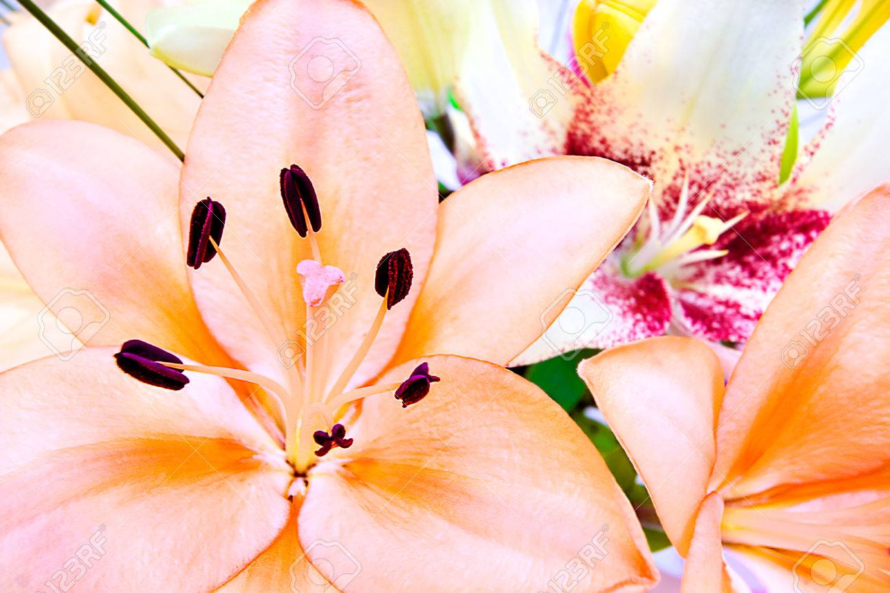 Close up image including a bunch of lily flowers focusing the close up image including a bunch of lily flowers focusing the pink color flower izmirmasajfo