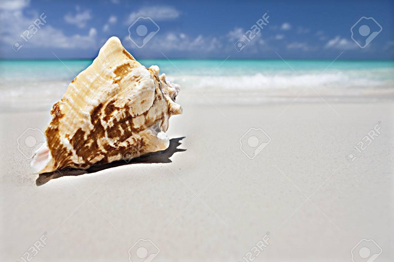Immagini Stock Conchiglia Sulla Sabbia Vicino Vicino Al Mare Con