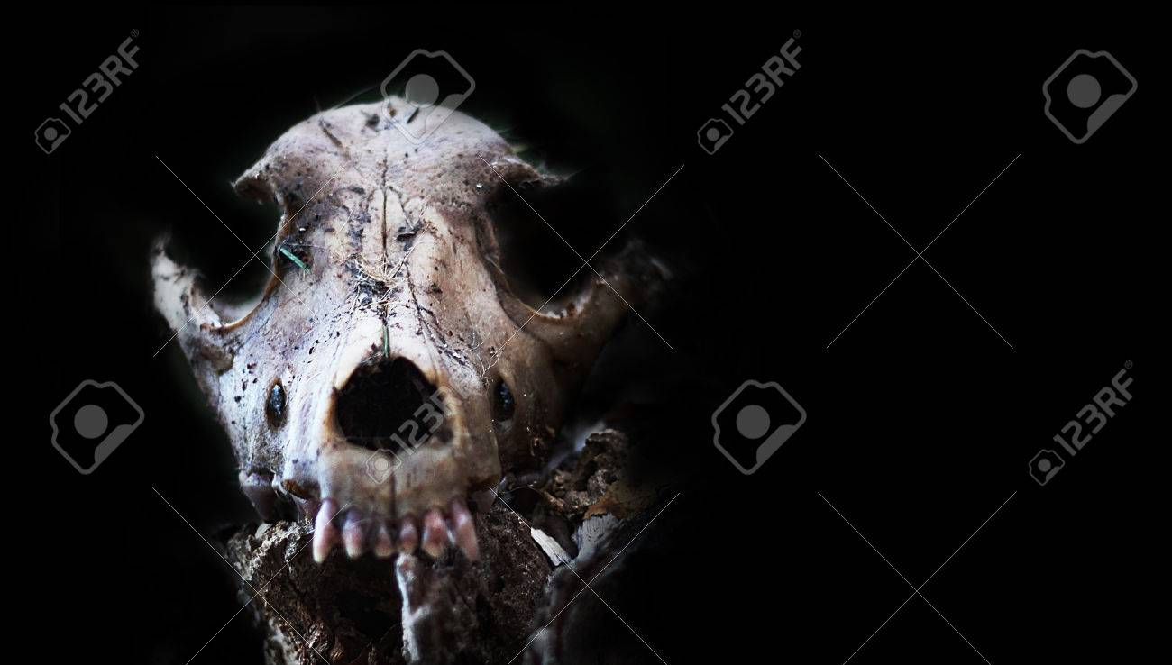 Great Wallpaper Halloween Grunge - 73692254-dog-skull-in-forest-scary-grunge-wallpaper-halloween-background-value-angel-of-death-slayer-spooky  Trends_941989.jpg
