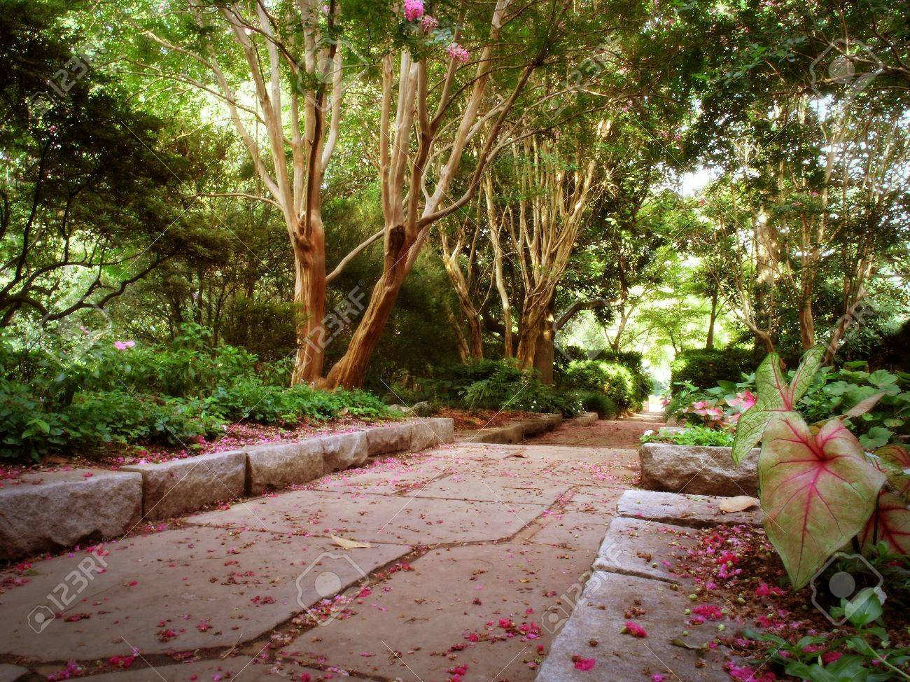 A Pathway Through A Woodland Garden In Summer Stock Photo, Picture ...
