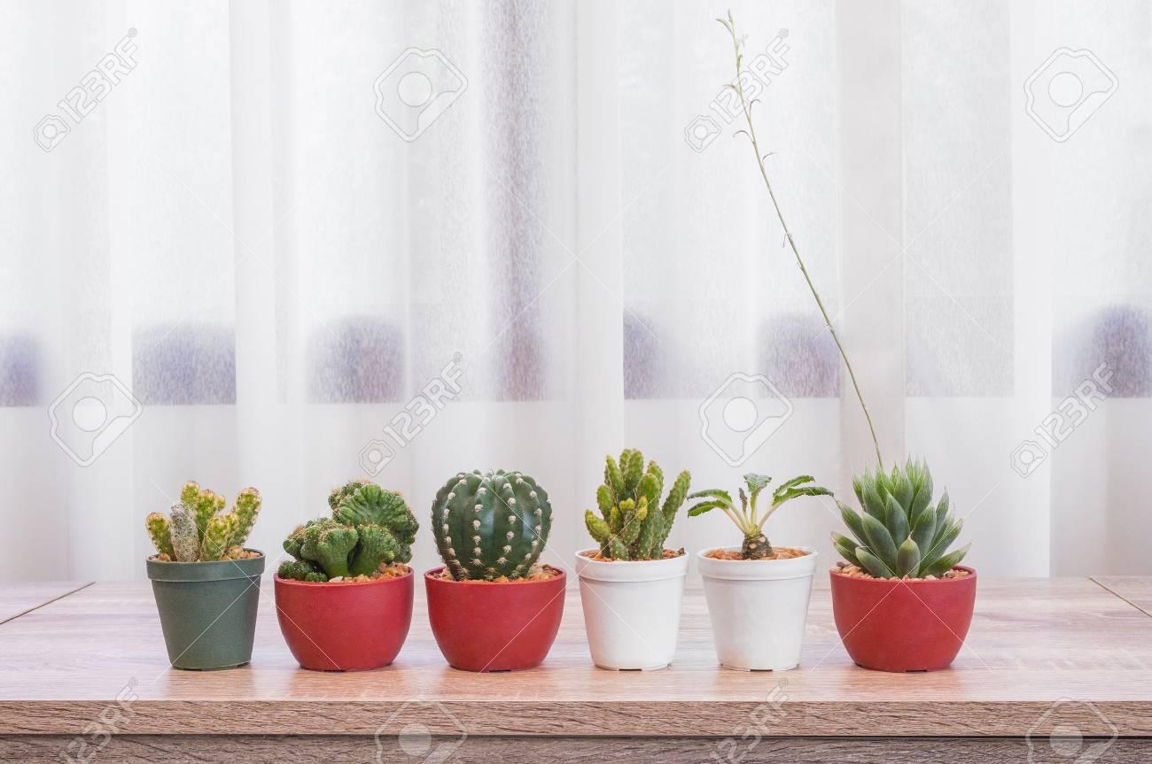 decoración fresca de la sala de estar Primer Verde Fresco Cactus En Maceta De Plstico Para Decorar En El Escritorio De Madera Y Ventana De Fondo En La Sala De Estar Con Espacio De Copia