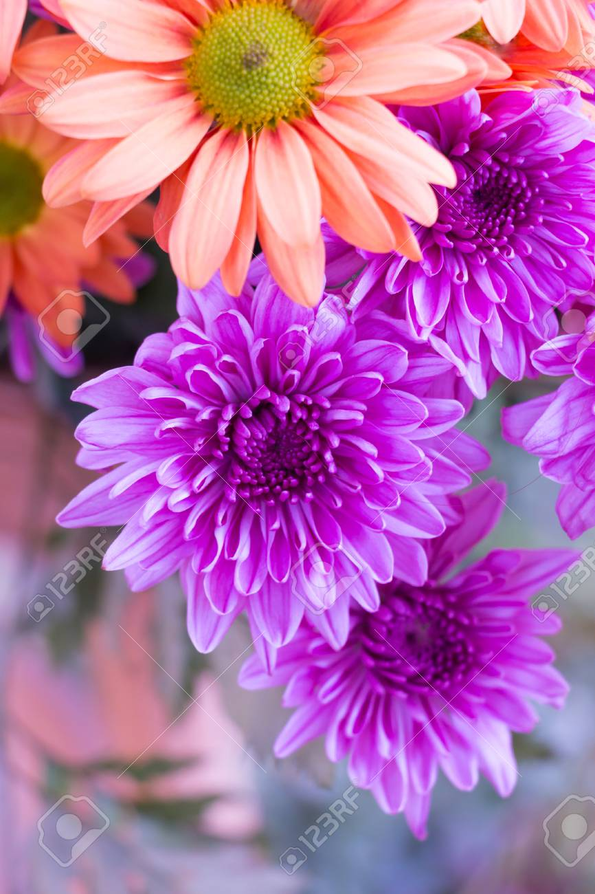 Bouquet Of Violet Chrysanthemum Flower And Other Colourful Flowers. Stock  Photo, Picture And Royalty Free Image. Image 97910501.