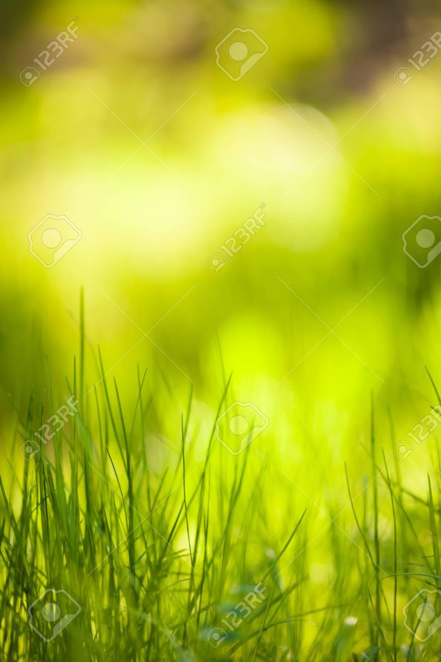 Green grass growing blurry grass background nature