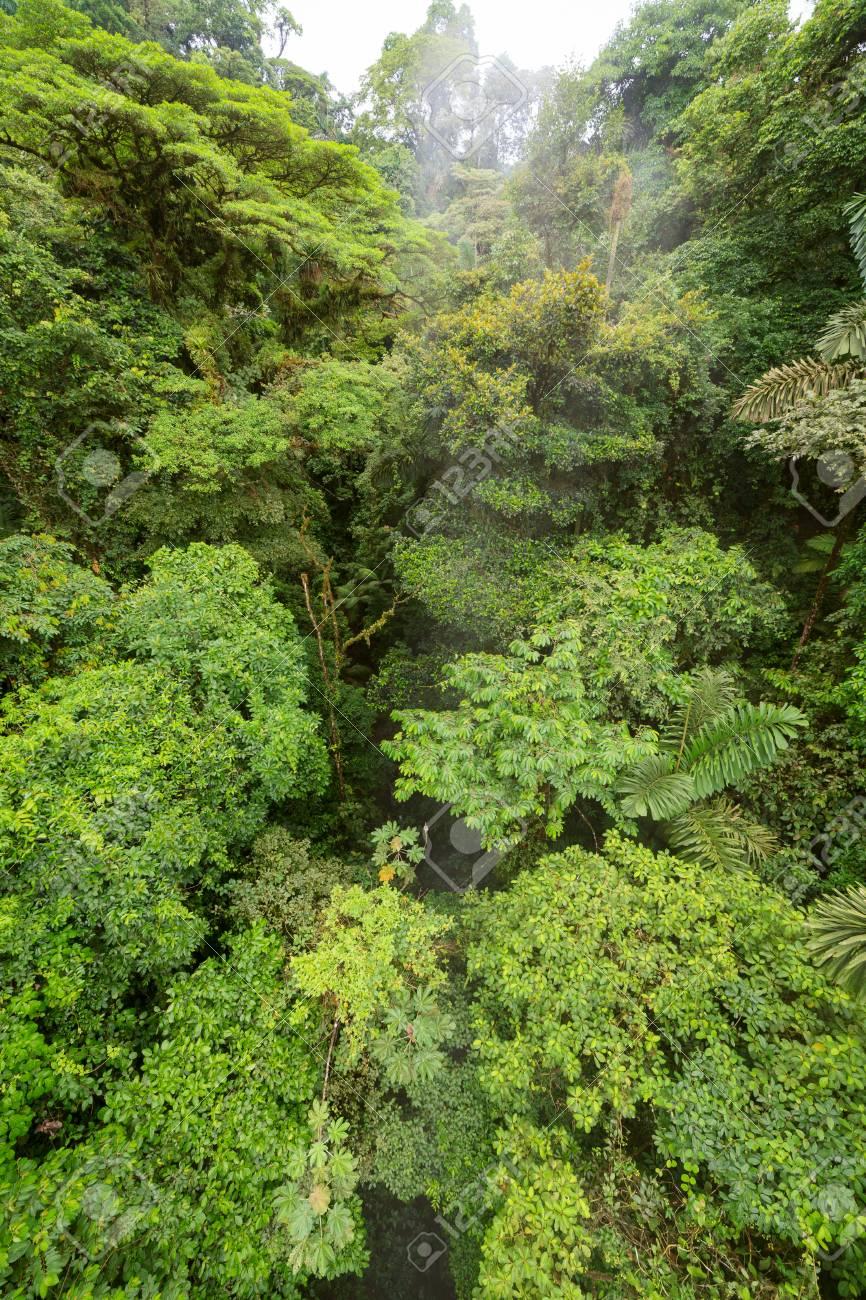 Lush rainforest canopy view Stock Photo - 79299282 & Lush Rainforest Canopy View Stock Photo Picture And Royalty Free ...