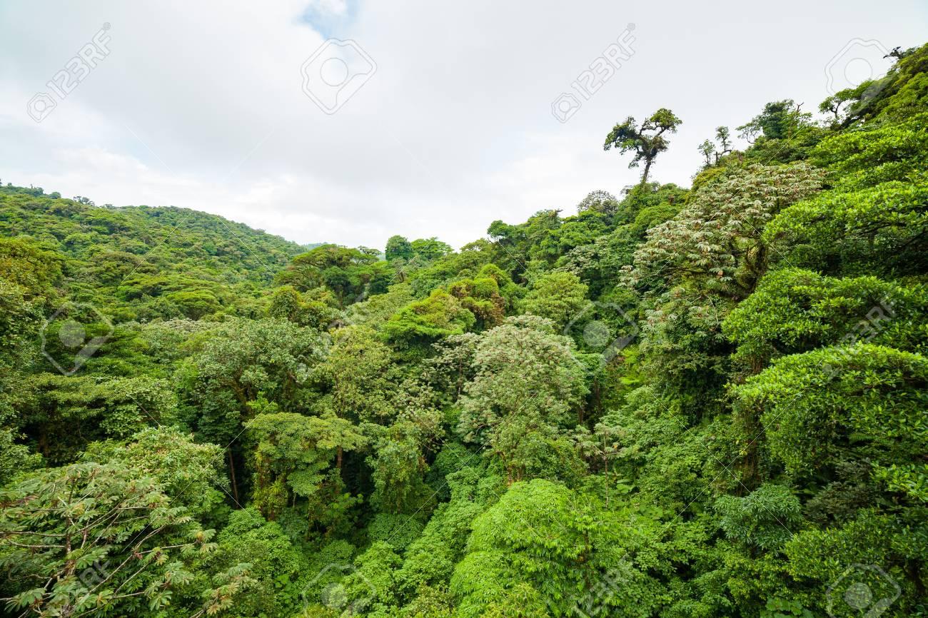 Lush rainforest canopy Monteverde Costa Rica Stock Photo - 85763184 & Lush Rainforest Canopy Monteverde Costa Rica Stock Photo Picture ...