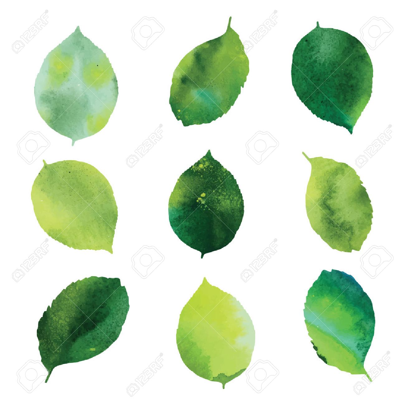Set of green watercolor leaves. - 52841999