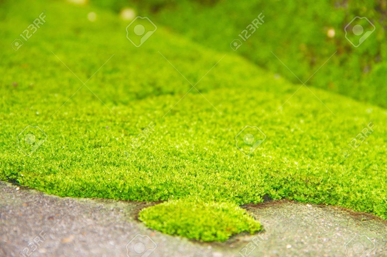 Fresh green natural moss background Stock Photo - 15112612