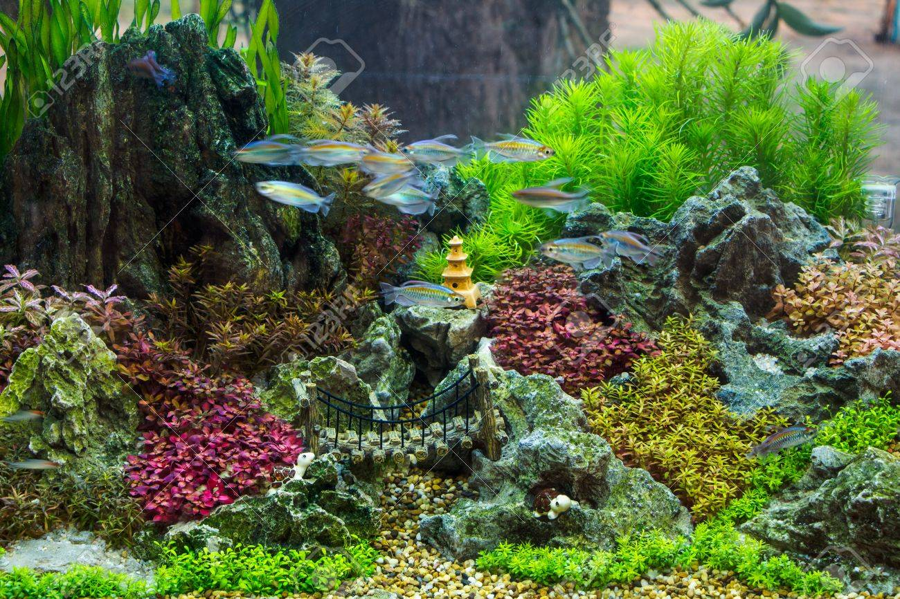 Beautiful aquarium Stock Photo - 26853741