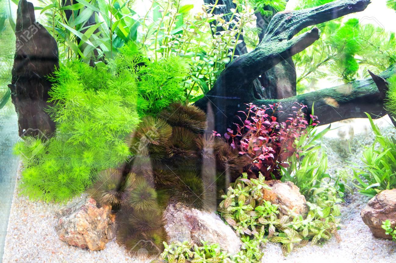 Beautiful aquarium Stock Photo - 26853930