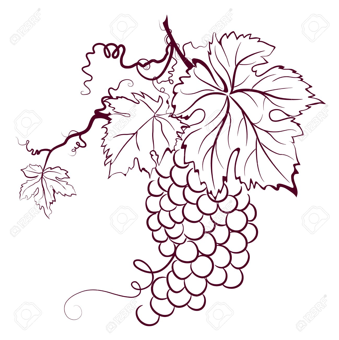 Grapes With Leaves Stock Vector  3651709