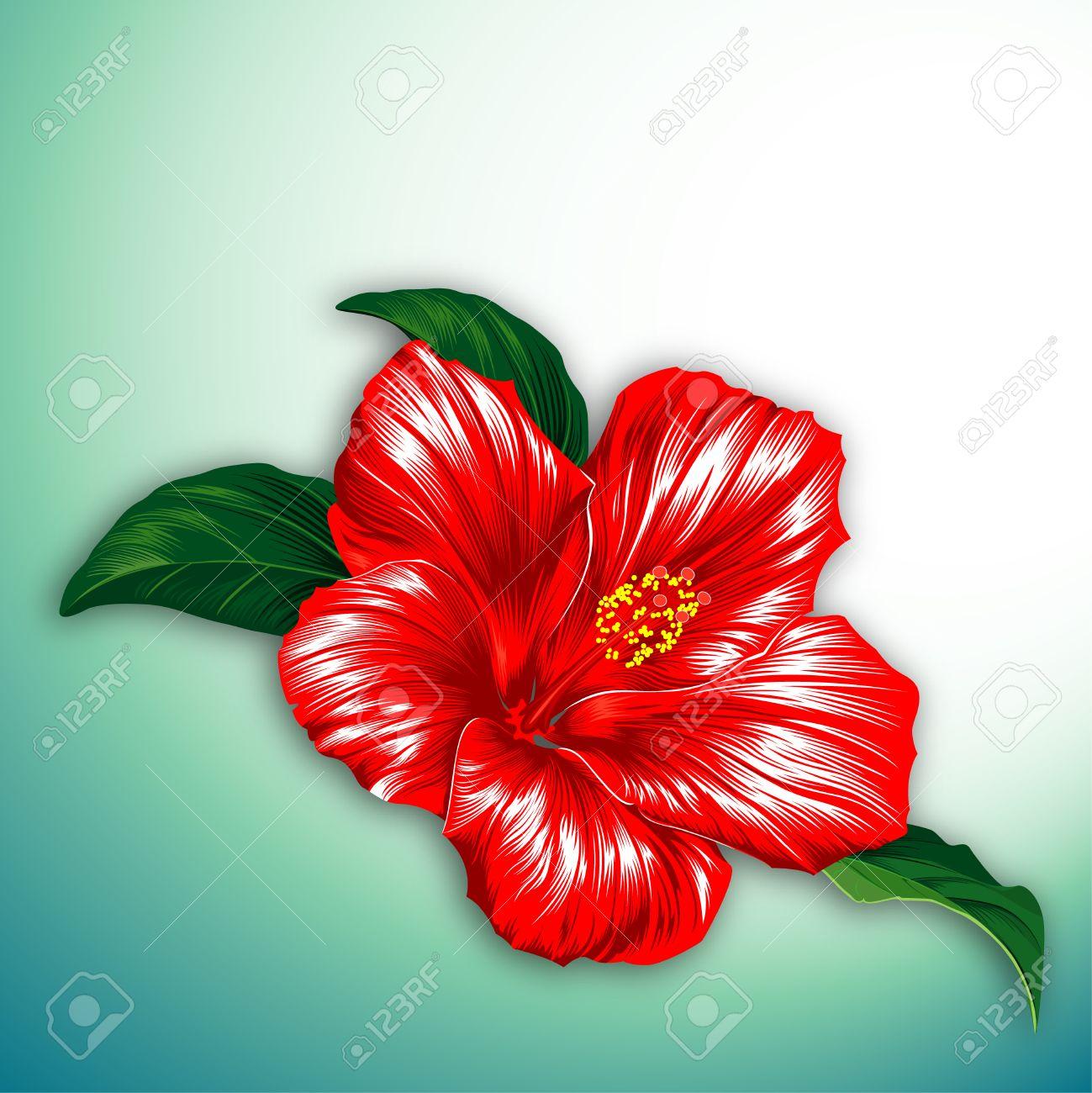 Fleur d\u0027hibiscus aux fleurs rouges avec des feuilles Banque d\u0027images ,  4851995