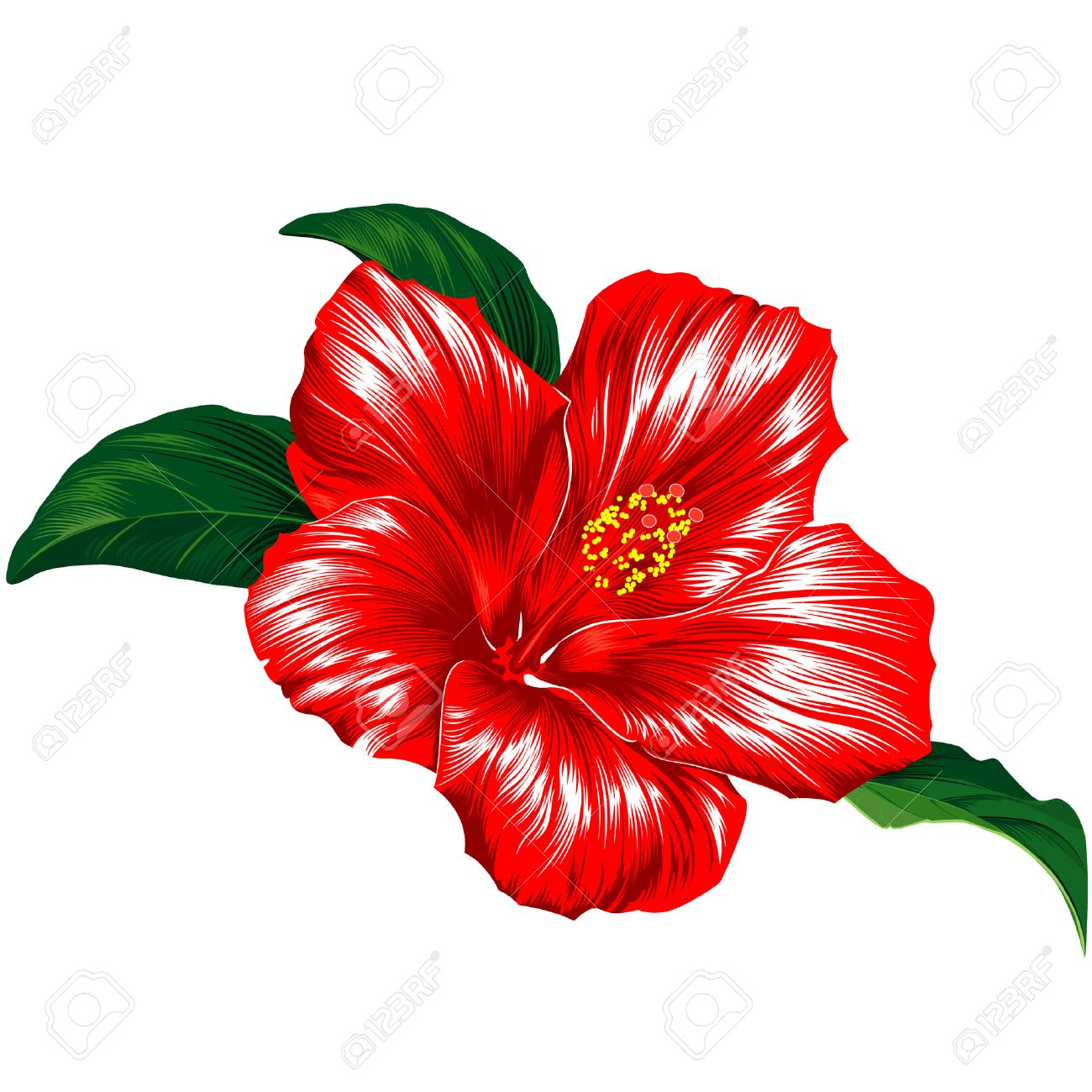 Red Hibiscus Flower Blossom With Leaves - 6608089