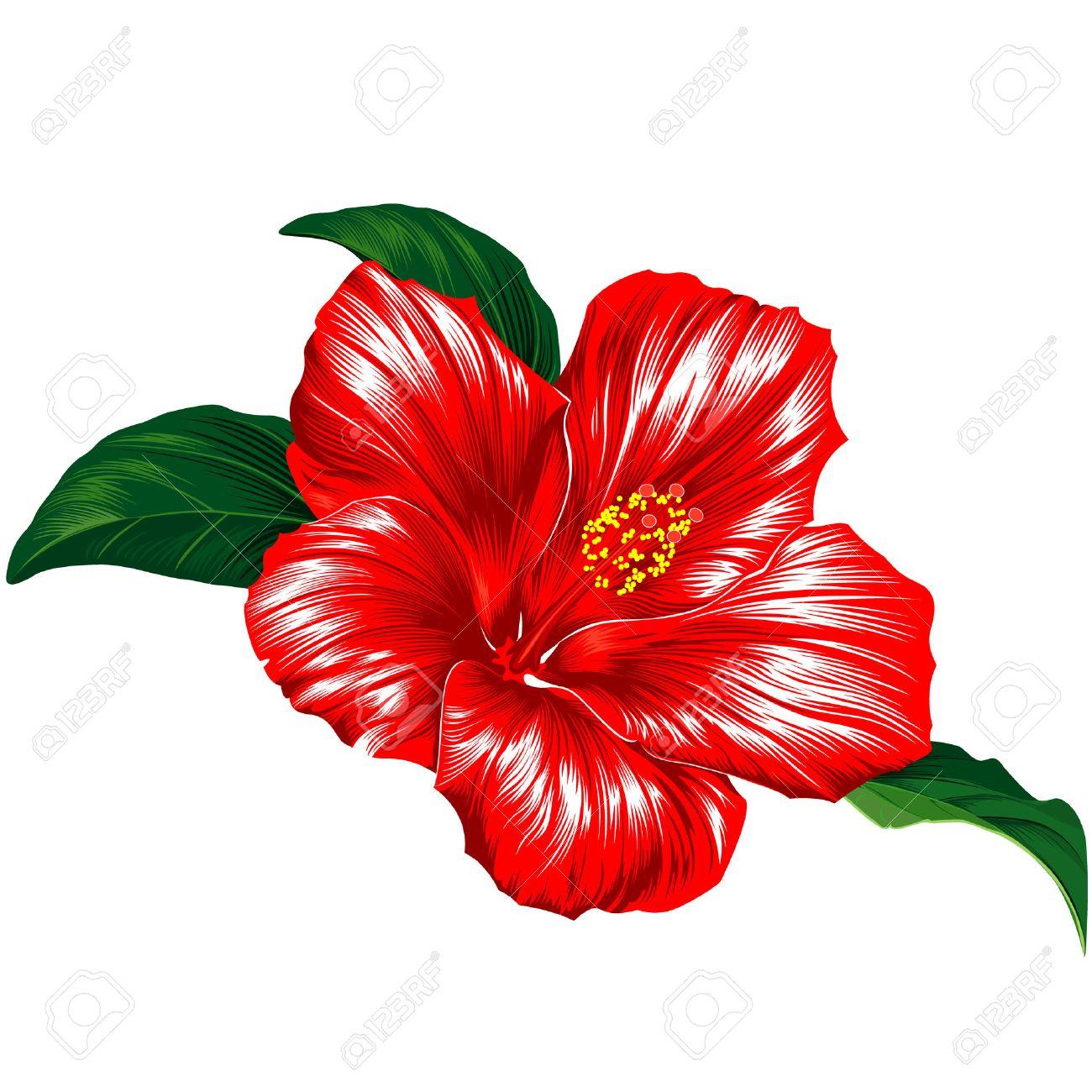 Fleurs De Fleurs Hibiscus Rouge A Feuilles Clip Art Libres De Droits