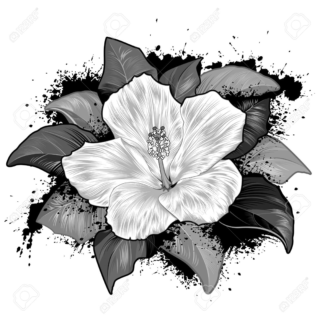 Hibiscus Flower Drawing On White Background Stock Vector