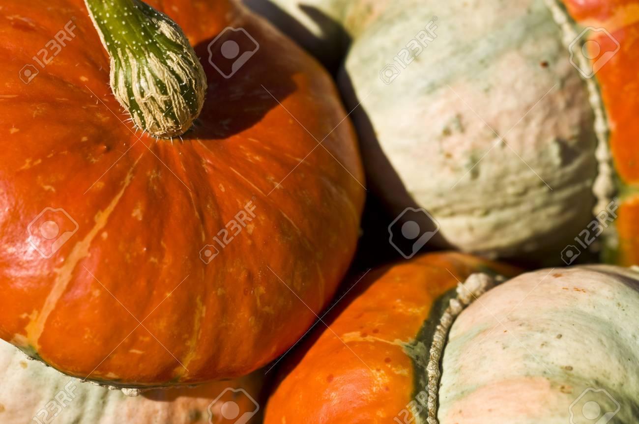 beautiful fresh pumpkins in the sunshine in autumn Stock Photo - 5650750