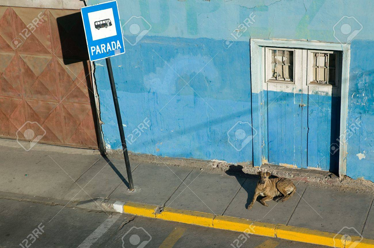 Colorful bus stop with a dog, probably waiting for the bus. Stock Photo - 2875026