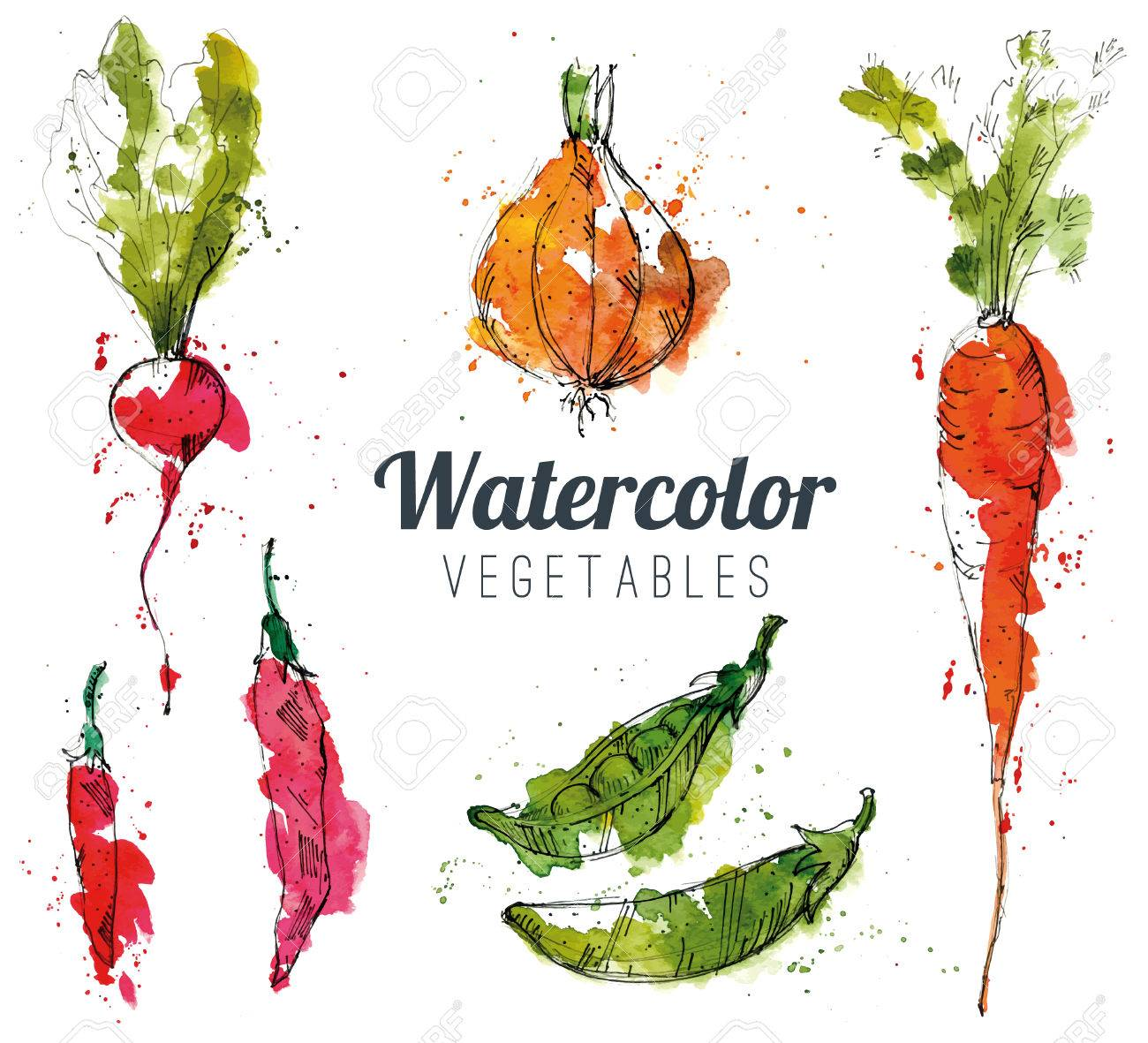 Set of watercolor vegetables - 37862552