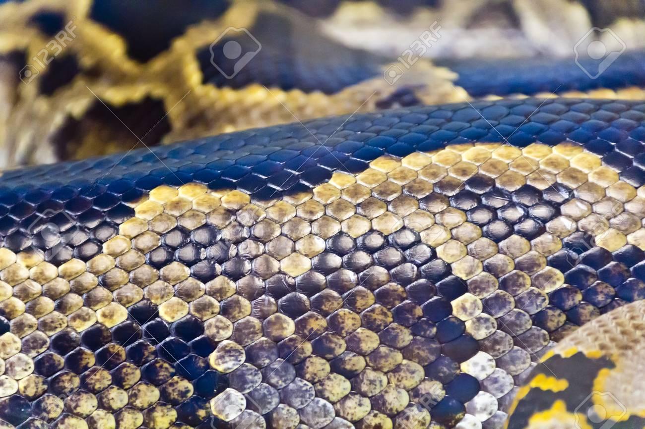 Foto Von Echten Boa Schlange Python-Haut Textur Schließen ...
