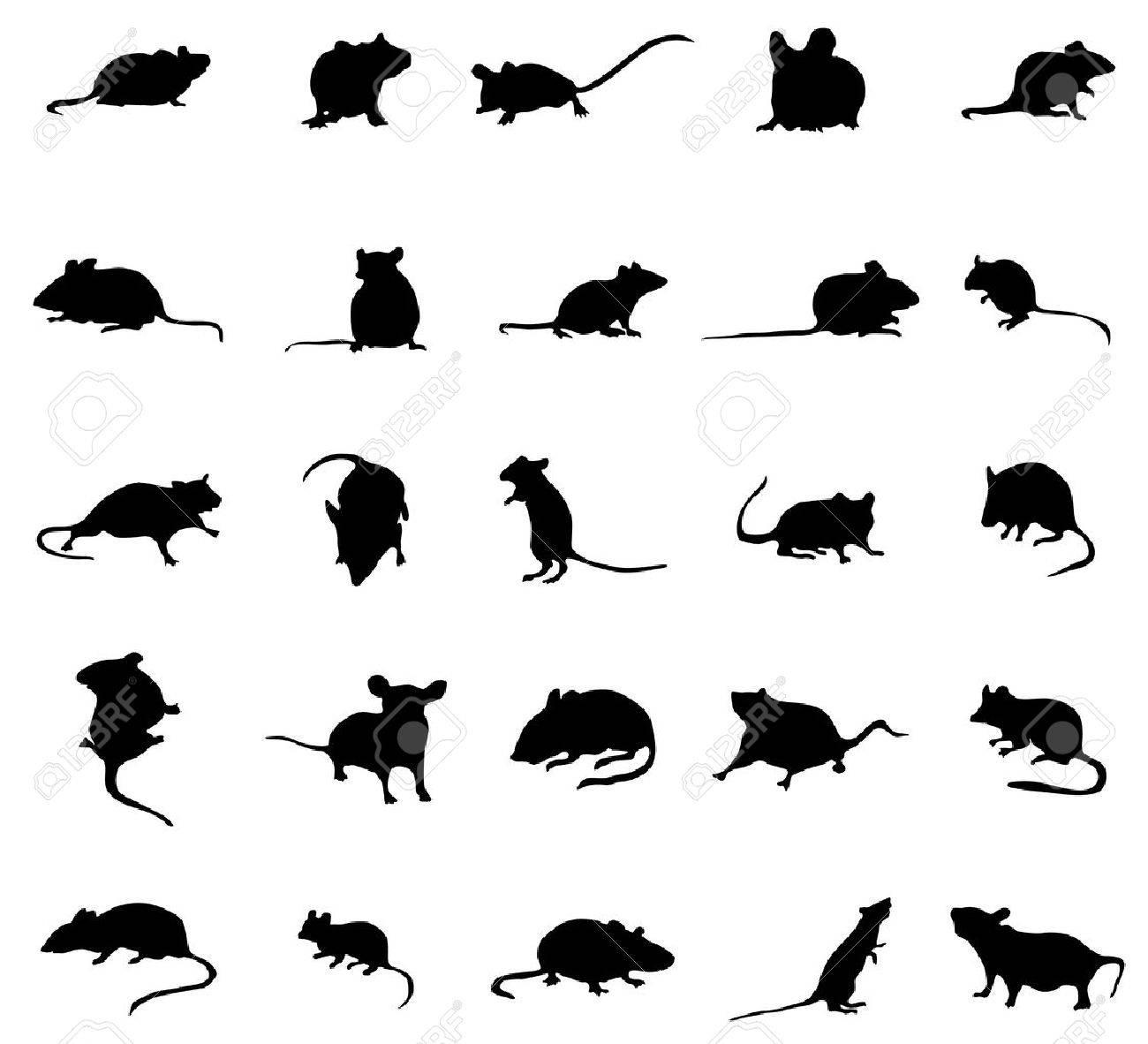 silhouettes souris set isolé sur fond blanc Banque d'images - 47990722