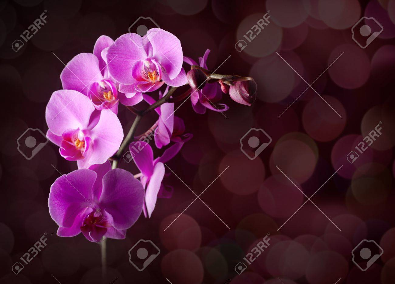 Orchid flowers on blurred dark background Stock Photo - 9613793