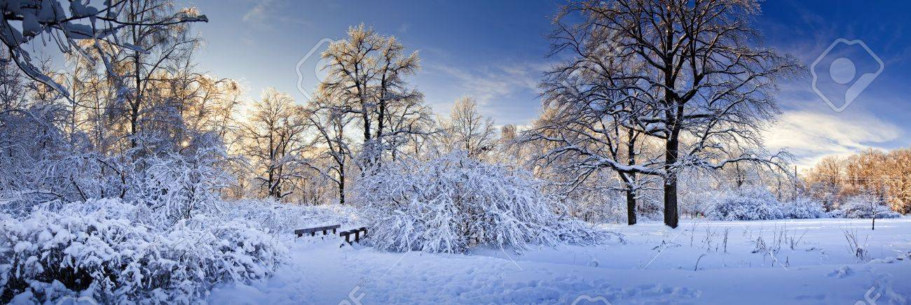 Calm and Quiet [HITORI ♥] 11354227-Panorama-d-hiver-d-un-parc-sous-la-neige-la-journ-e-ensoleill-e-Banque-d'images