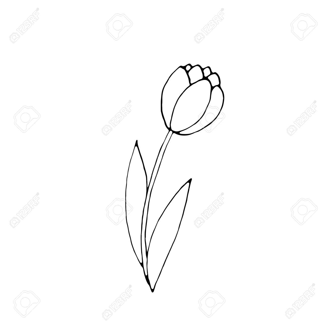 Outline Of Tulip Flower Isolated On White Background Hand Drawn Royalty Free Cliparts Vectors And Stock Illustration Image 161277862