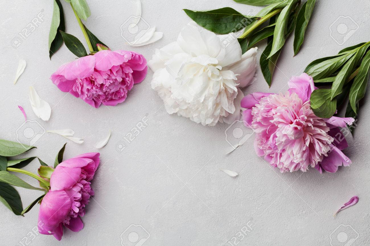 Beautiful pink and white peony flowers on gray stone background beautiful pink and white peony flowers on gray stone background with copy space for your text mightylinksfo