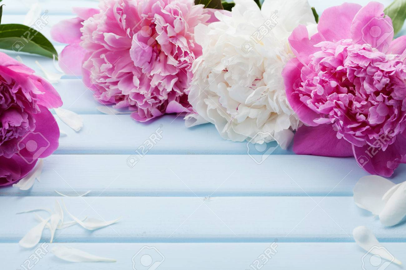Beautiful pink and white peony flowers on blue vintage background beautiful pink and white peony flowers on blue vintage background with copy space for your text mightylinksfo