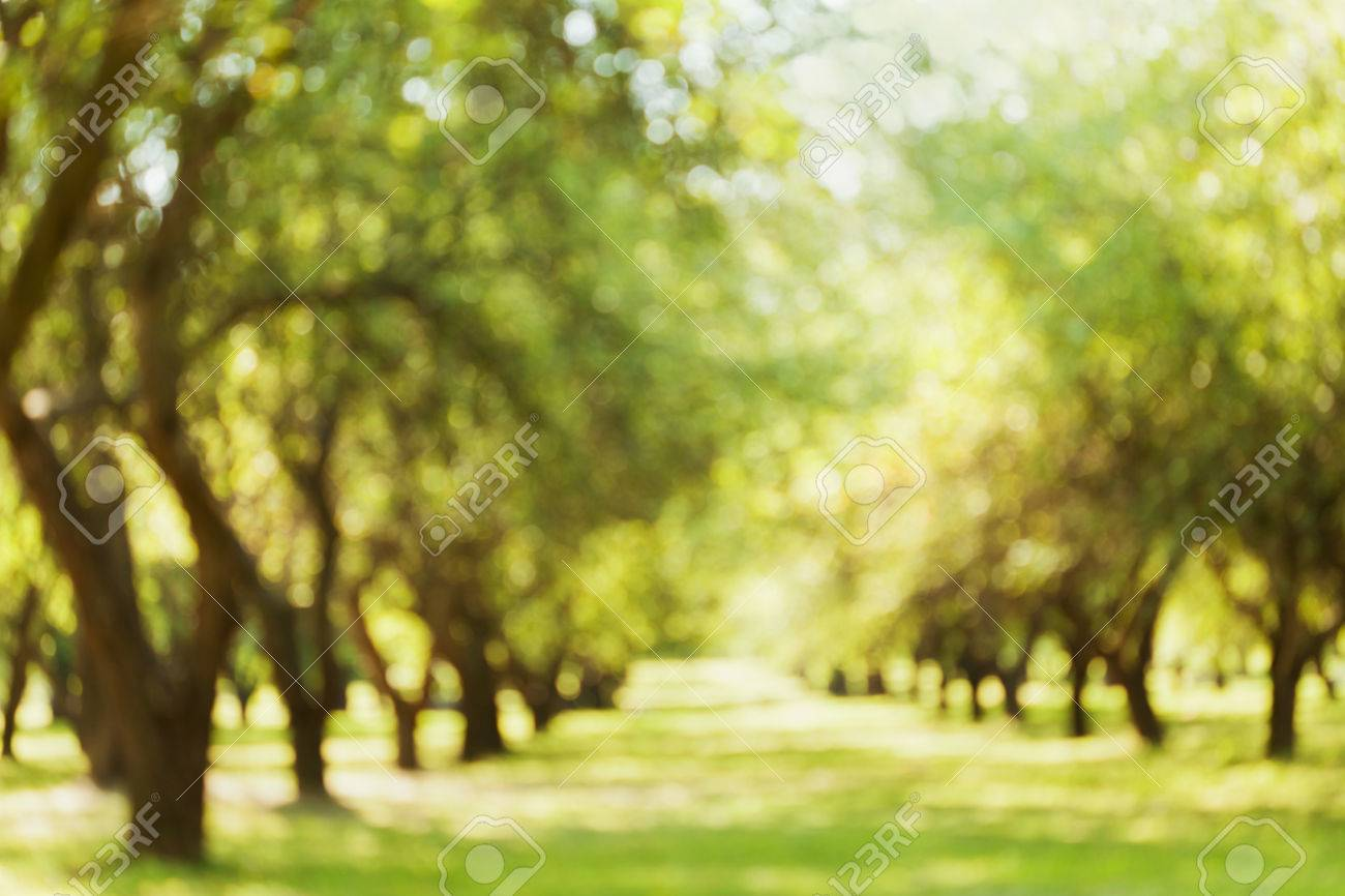 blurred outdoor backgrounds.  Outdoor Blurred Landscape Defocused Bokeh Background Of Beautiful Park Or Garden  Parkland Outdoor Backdrop Throughout Backgrounds D