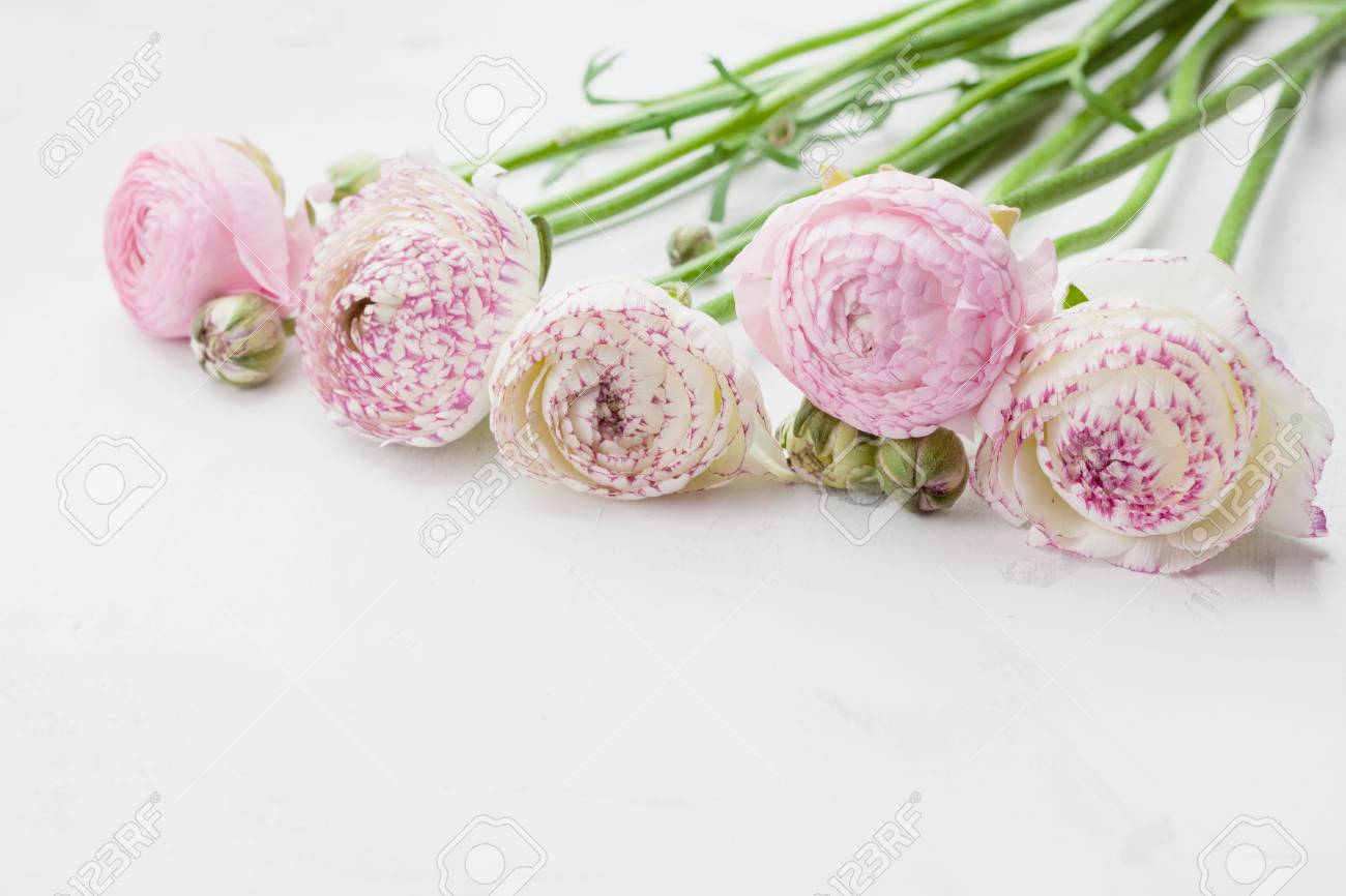 Beautiful Ranunculus Flowers On White Stone Table Floral Border