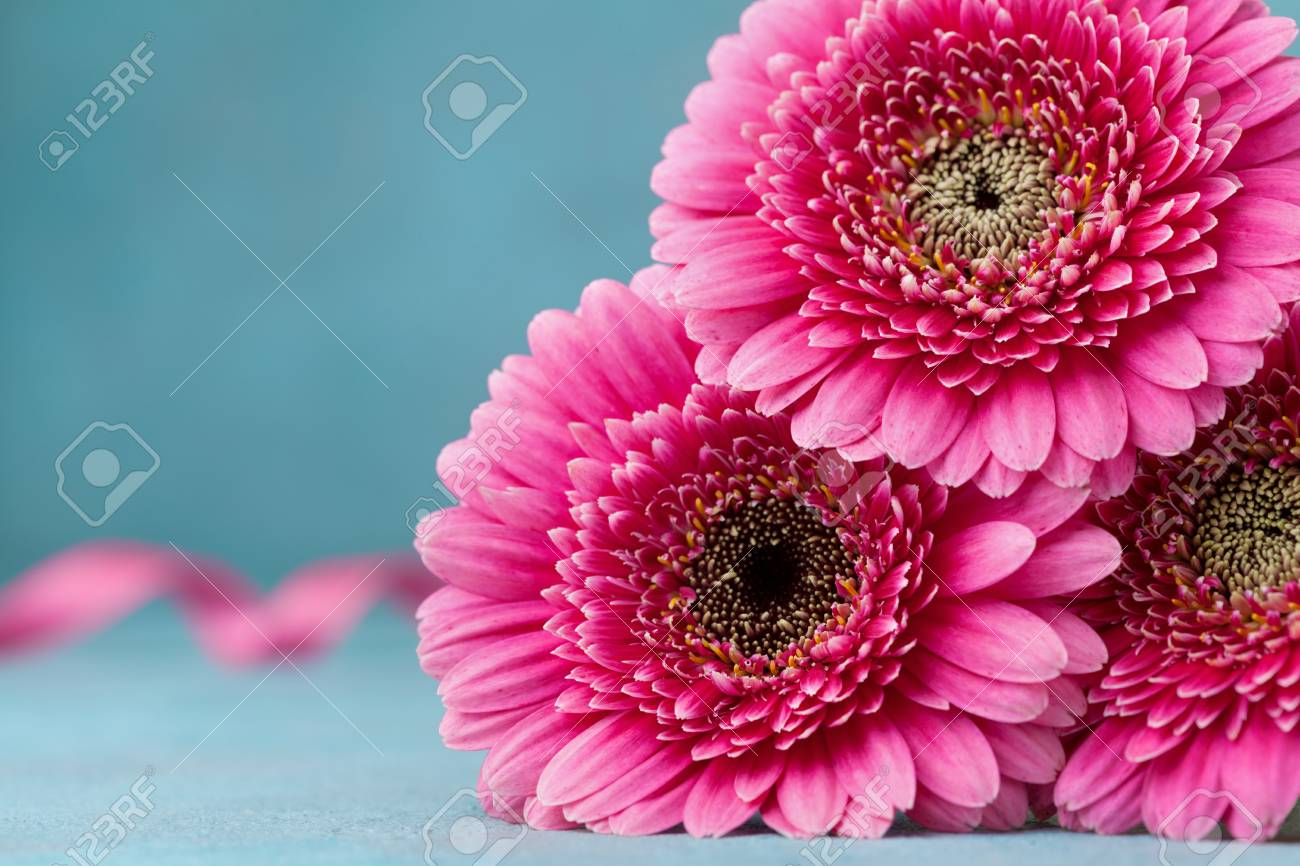 Beautiful Pink Gerbera Flowers On Turquoise Table Greeting Card