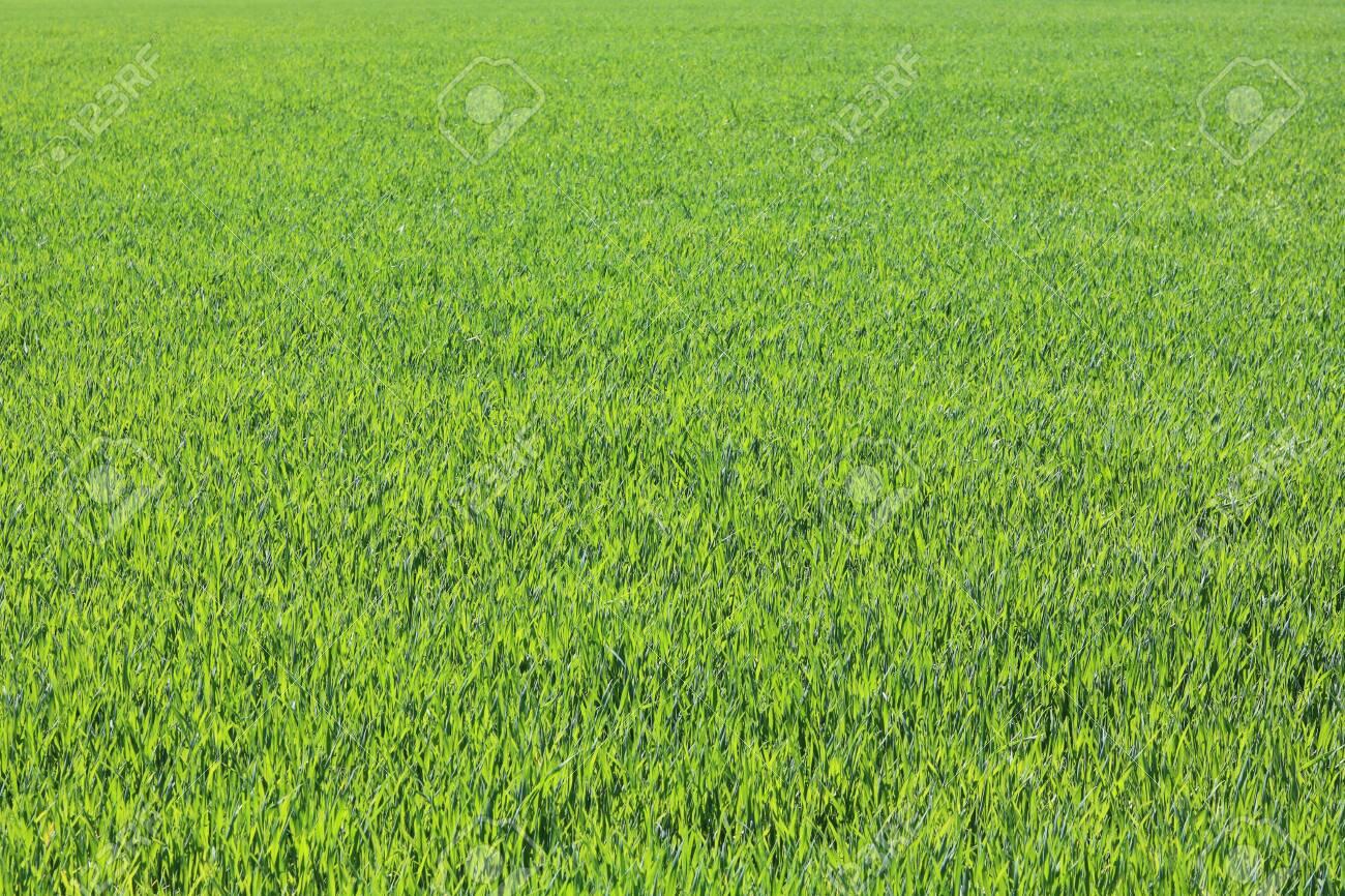 Spring green grass - 122132447