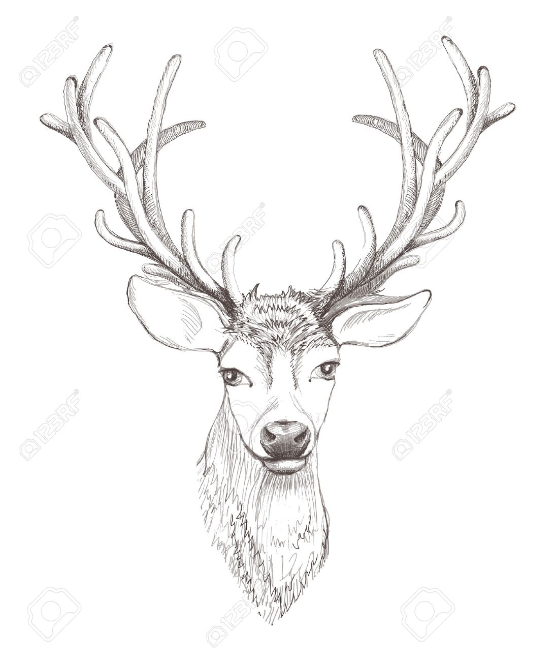 Deer head isolated beautiful sketch illustration stock vector 25117807