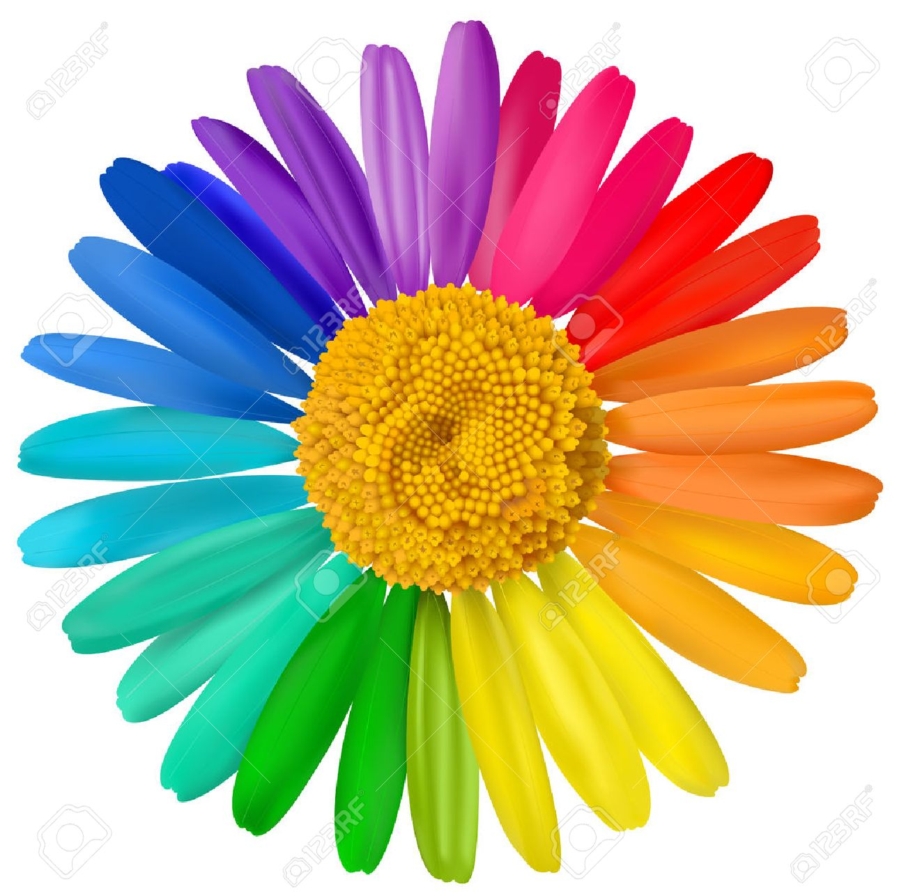 Vector multicolored daisy, chamomile flower isolated. - 28104593