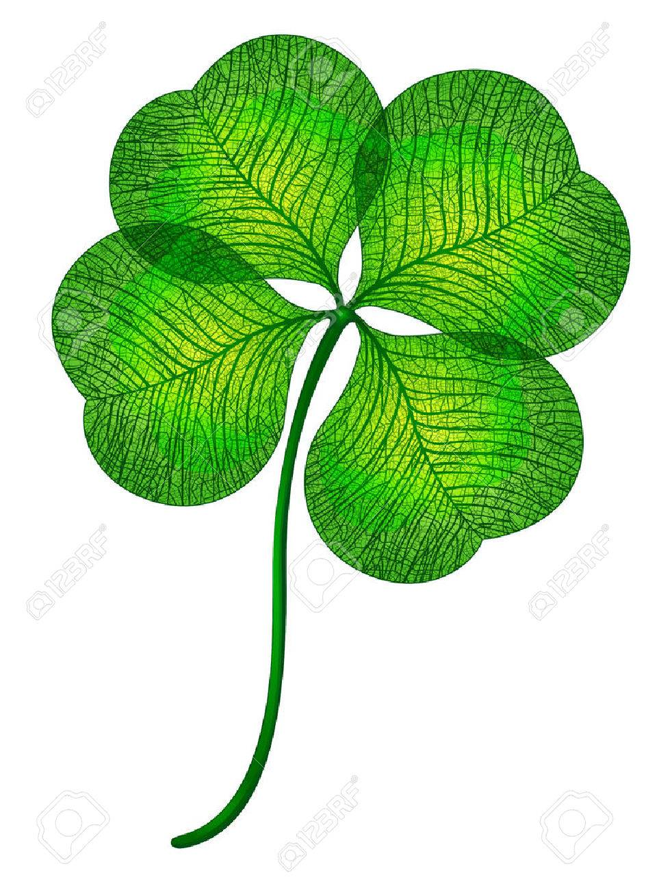 Verbazingwekkend Four Leaf Clover Isolated. Royalty Free Cliparts, Vectors, And PW-83