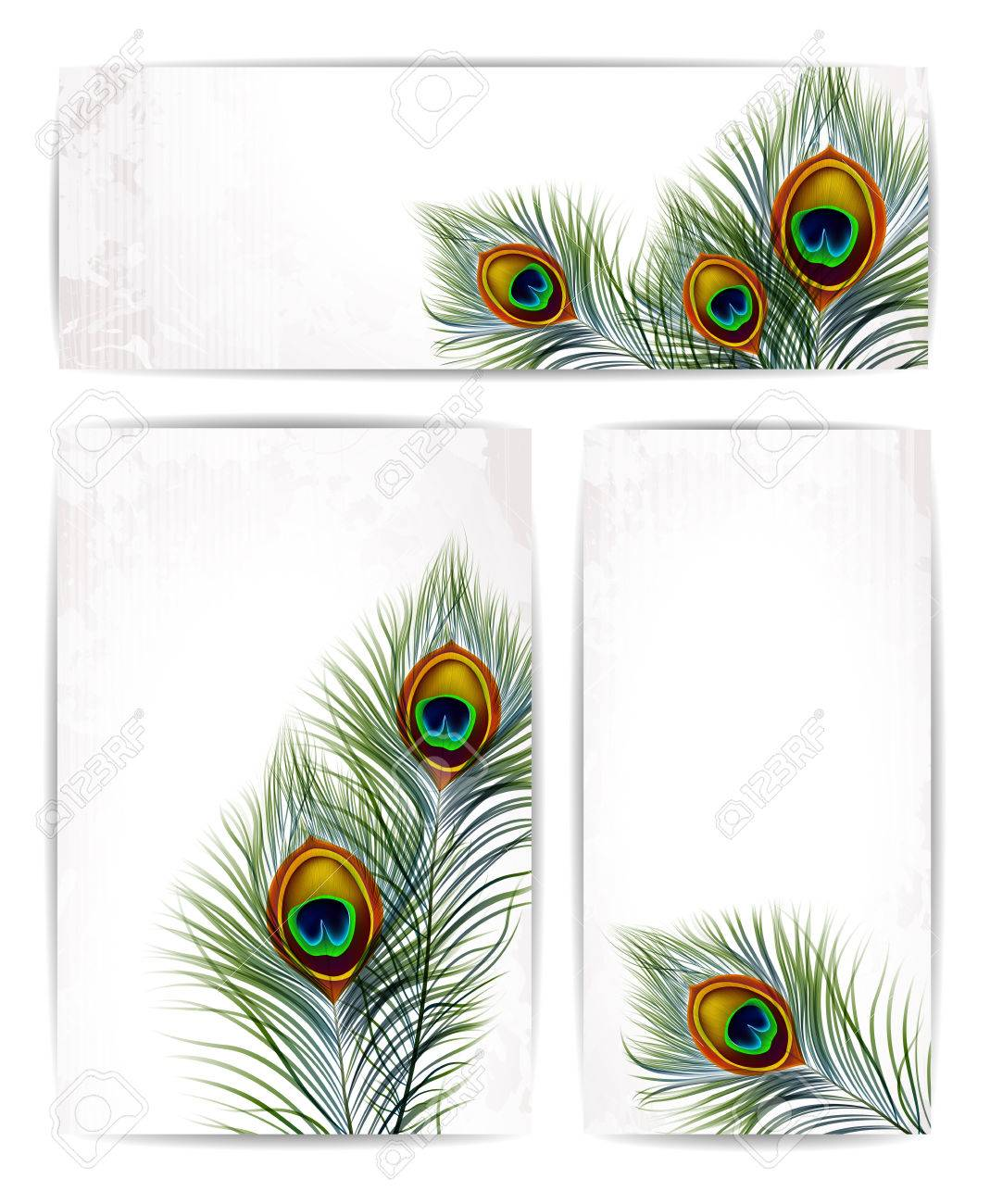 Set of vector peacock feathers with space for text. EPS 10 - 40823900